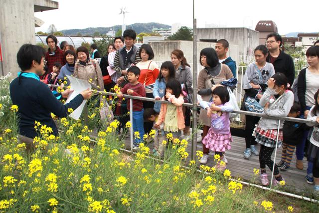 京エコロジーセンター屋上の田畑